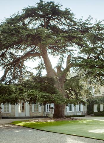 Beychevelle, un hommage à la nature - Chateau Beychevelle